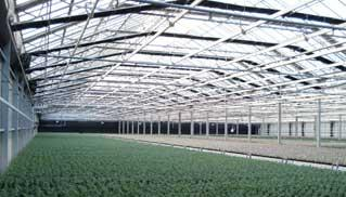 Large Commercial Widespan Greenhouse